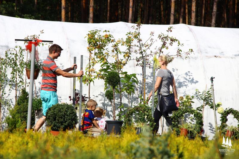 Burziwoda Hortensjowy zawrót głowy wrzesień 2018 impreza kwiatowa